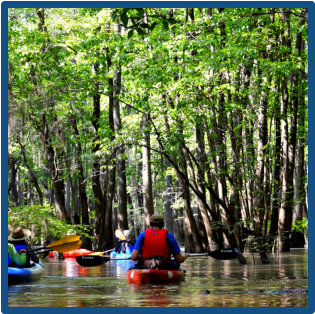 Paddle Lake Marion, Santee and areas near Santee State Park, Poinsett State Park