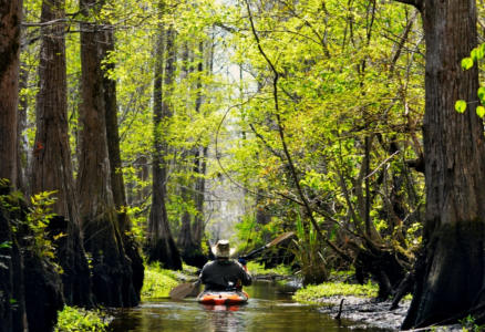Kayaking Wadboo Creek a swamp tour and marsh tour in one nature tour