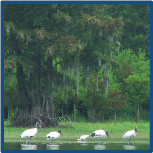 Kayaking near Santee State Park for incredible wildlife nature tours