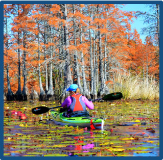 Kayak Lake Moultrie on swamp and nature tour for amazing wildlife viewing